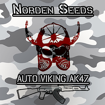 Norden seeds Auto Viking AK47 feminized.