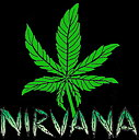 Nirvana AUTO Short Rider, 5-pack, Feminized
