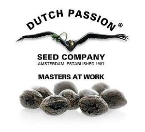 Dutch Passion AUTO White Widow 7-pack