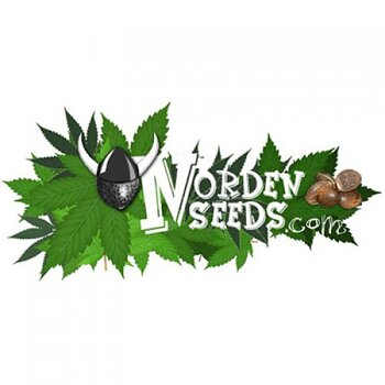 Norden seeds White Widow, Feminized.