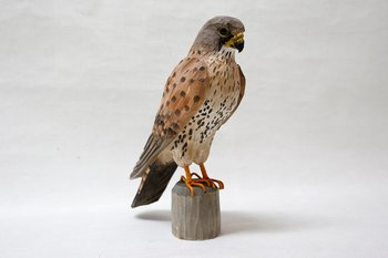 Common kestrel Wood 30x27x10 cm