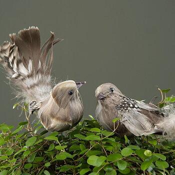 Prydnadsfåglar på stick FLUFF stor 17 cm 2-set