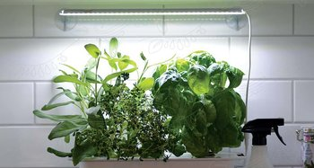 Växtbelysning Small (med adapter) Nelson Garden