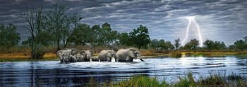Herd of Elephants 2000 Bitar Heye