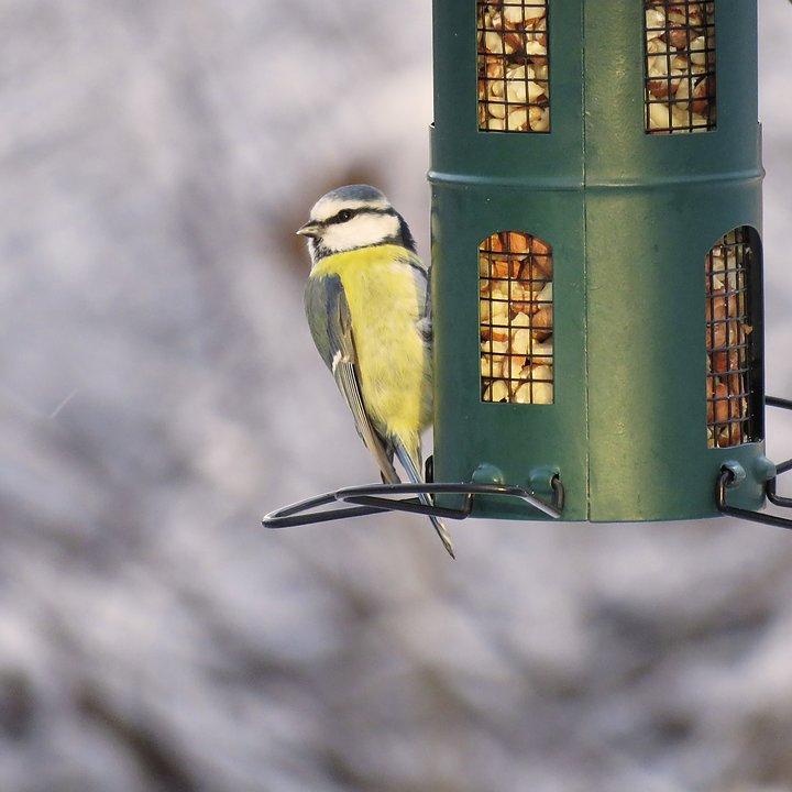 mata småfåglar på sommaren