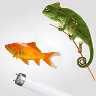 Akvarium och reptil lysrör