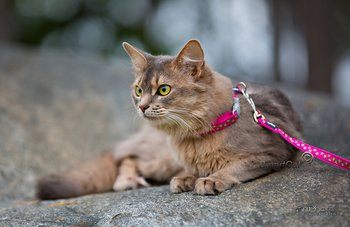 Kattsele Hot pink med Limegröna strjärnor