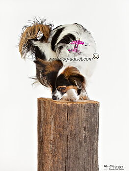 Hundsele Reflex Starkt Rosa