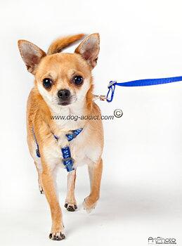 Hundsele Reflex Marinblå