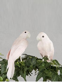 Fågel rosa papegoja dekoration shabby chic lantlig stil