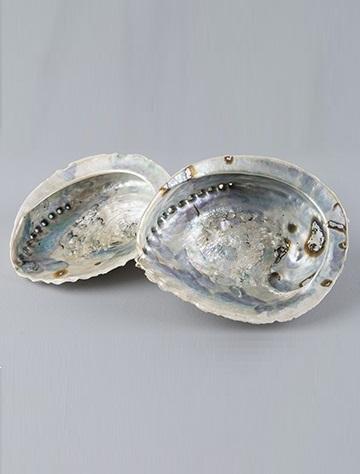 Stor äkta snäcka Paua Abalone fat dekoration shabby chic lantlig stil