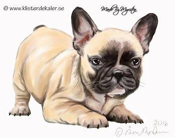 Fransk Bulldogg hund, bildekor
