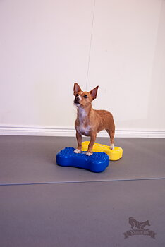 Canine Gym in a Box: Balance Disc 56 cm, Cavaletti, 2 x FitBone, 2 x FitBone Mini, SensiMat, PawStackers & Pump