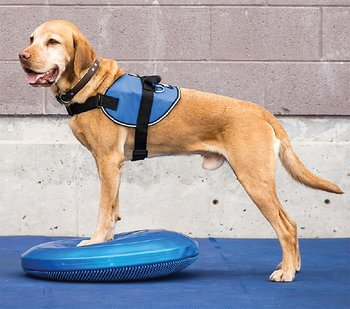 Canine Gym in a Box: Ramp, Balance Disc 56 cm, 2 x Cavaletti, FitBone, 2 x FitBone Mini, SensiMat, PawStackers & Pump