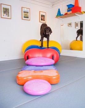 Doggie-Zen gym - grundkurs, 8 mars-3 maj