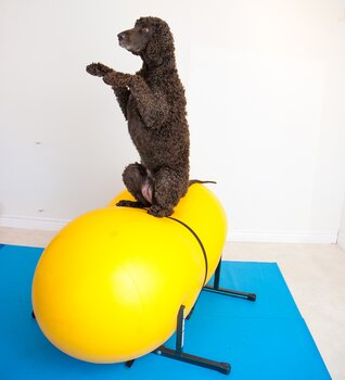 Doggie-Zen gym - del 2, 4 april - 30 maj