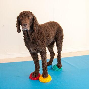 Doggie-Zen gym - del 2, 4 april - 30 maj