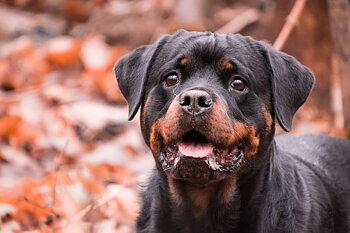 Hund- & människomöten, enstaka tillfällen