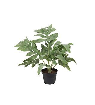 Ormbunke, konstväxt från Mr Plant