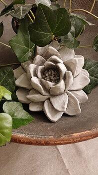 Latexform näckros, lotusblomma
