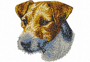 Jack Russell Terrier/Parson Russell Terrier