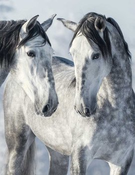 MAGIC HORSES II