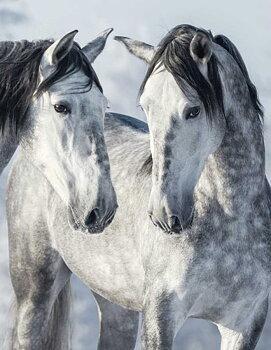 MAGIC HORSES II