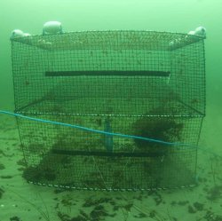 Cod Trap, Small, Two Entrances