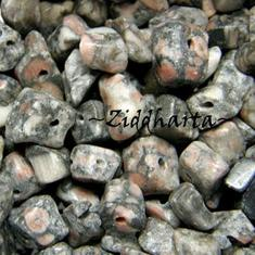 10gr Av snäckskalsfossil: Fossil Agat chips