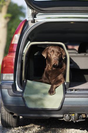 Transportbur till Hund   L60 x H41 x B42 cm