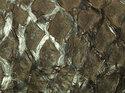 Fiskskinn av abborre. Blank chokladfärgad, ca 24*6 cm