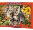Kitten Buddies 1500 Bitar Castorland