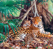 Jaguars in the Jungle 3000 Bitar Castorland