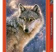 Lone Wolf 500 Bitar Castorland