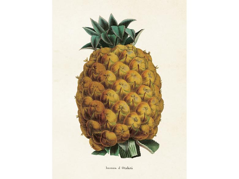 Affisch 'Ananas' liten