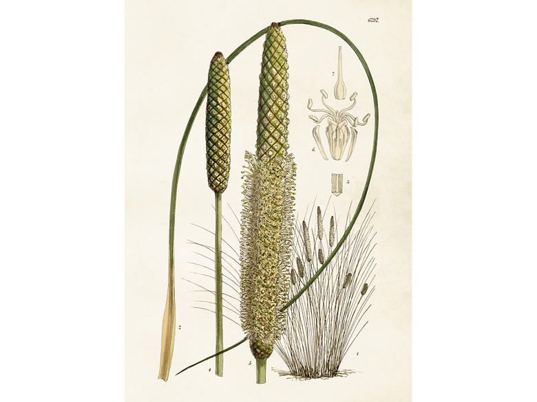 Affisch 'Gräs' stor