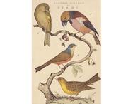 Affisch/presentpapper 'Fåglar'