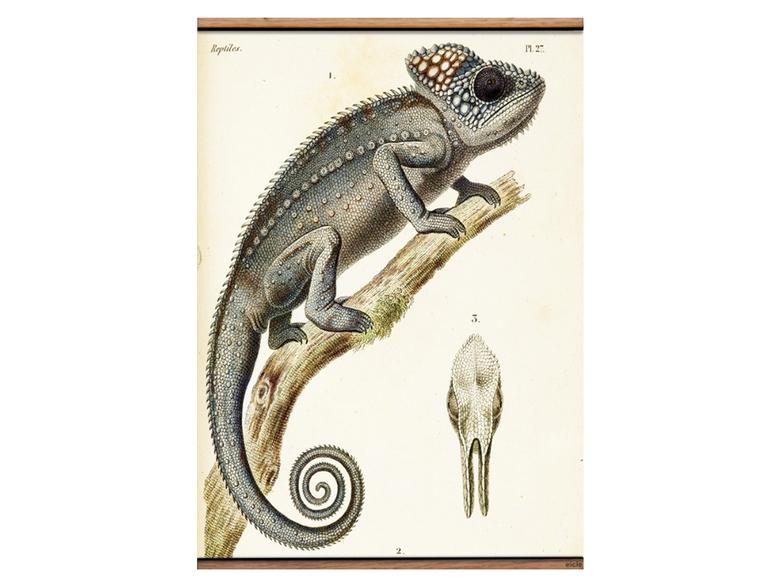 Väggbonad 'Kameleont' liten