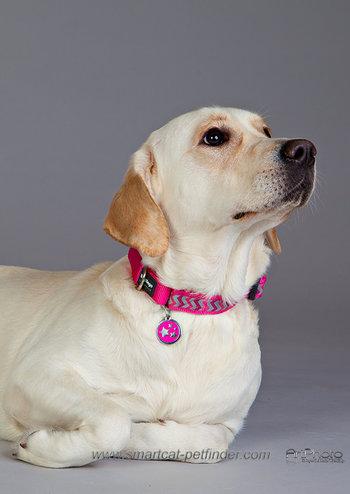 Ziggy Dog Collar