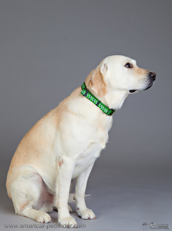 Ziggy MG Dog Collar