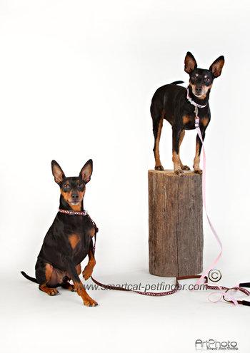 Dots Hundhalsband Brunt-Rosa