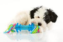 Tuggleksak - Chew and Play - Blå