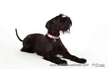 Flanno Dog Collar