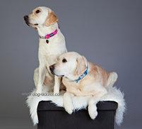 Flanno Dog Collar TQ