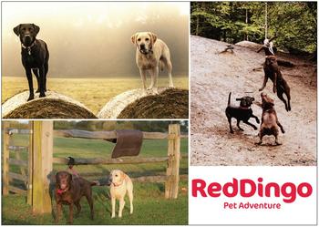 Reklamblad Red Dingo A6