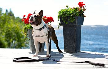 Hundhalsband Döskalle och taggtråd