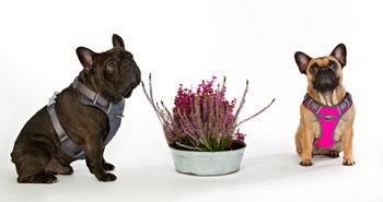 Rosa Softsele Hundsele vadderad M