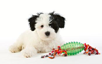 Repleksak Dog Addict Chew Comfy