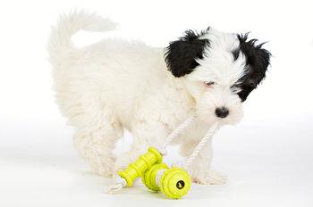 Repleksak Dog Addict Chew Fun