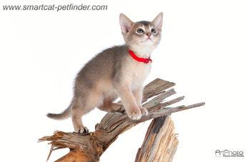 Kitten red